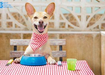 3 Things You Ought to Know About Ethical Dog Food